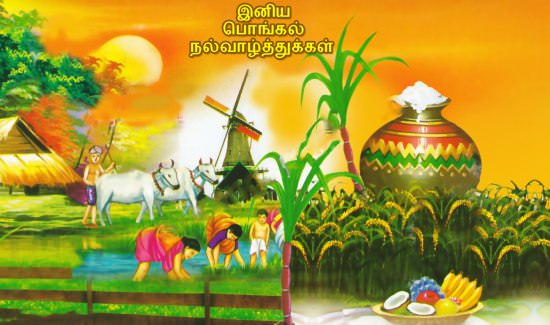 pongal images 4